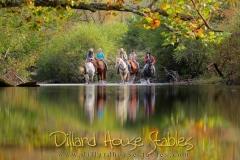 Dillard House Stables